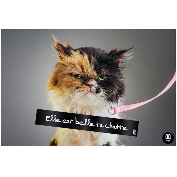 Moquerie - La Plexi Barre - Elle est belle ta chatte